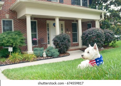 Dog in american flag scarf on driveway of luxury house