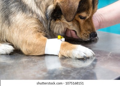 Dog in the animal hospital