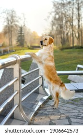 Dog Animal Pet Autumn Goldenretriever