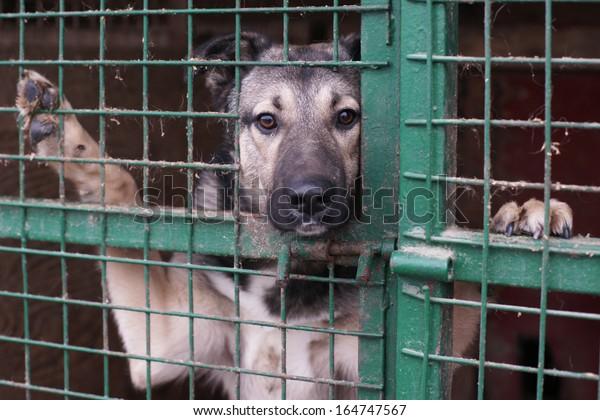 Chien dans un refuge pour animaux