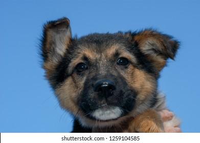 Dog at the animal shelter of Lugano on Switzerland