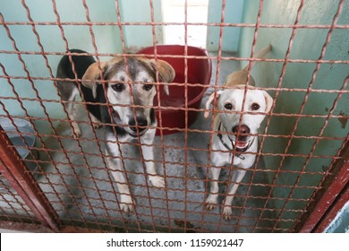 Dog in an animal shelter waiting for someone to adopt them.