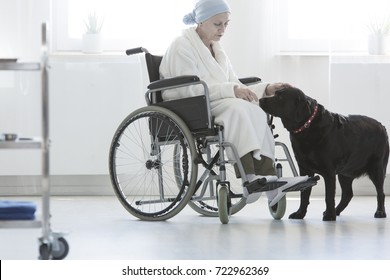 Dog assisting disabled senior woman sitting with dressing-gown in wheelchair