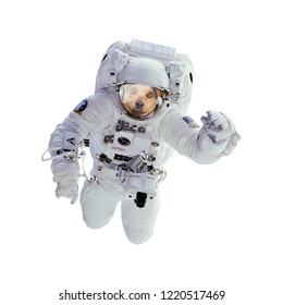 Dog as astronaut or spaceman isolated. Elements of this image provided by NASA