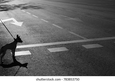 Dog awaiting to cross the road