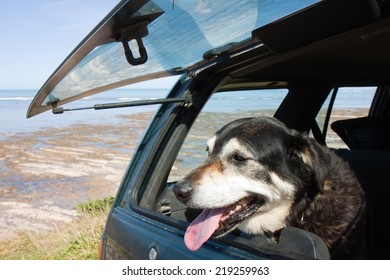 dog in back of family four wheel drive vehicle waiting for it's owner looking out open window