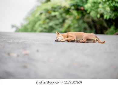 Dog, background of Thai dog sitting or sleeping on the street Many gestures (smiling, closed eyes, sleeping, crying) are often seen in parks or places where people pass by, some rabies carriers.
