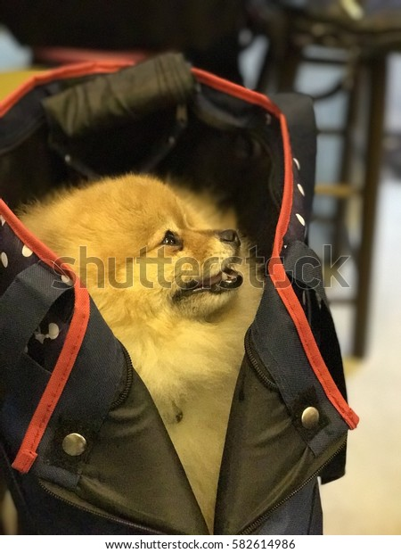 A dog in bag