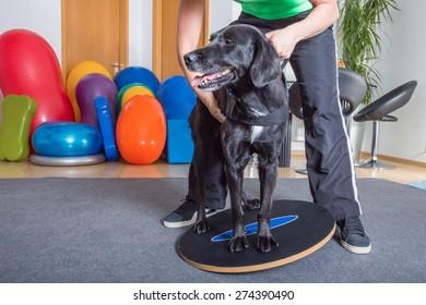 dog balance
