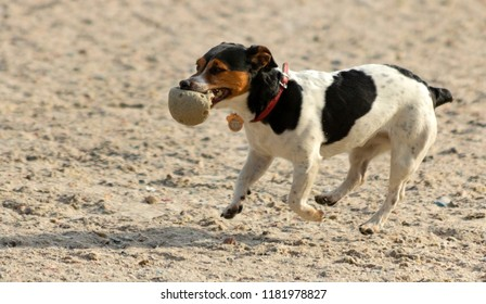 Dog with a ball on the riverbank