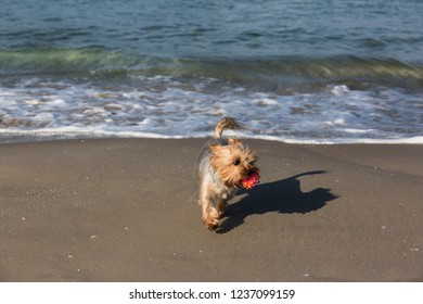 The dog with the ball on the shore of the blue sea