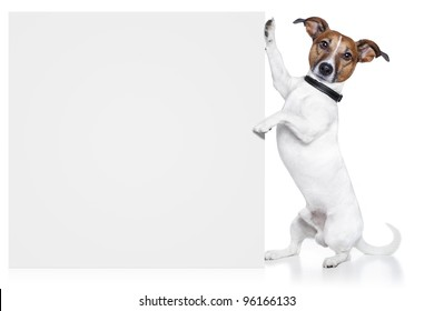 dog with banner white