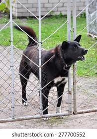 Dog barking through the fence.