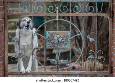 Dog barking through the fence. protects the house