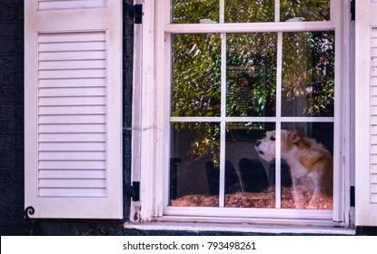 Dog Barking Images Stock Photos Vectors Shutterstock