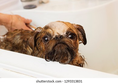 dog bathes in the bathroom at the groomer