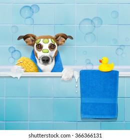 dog in a bathtub not so amused about that , with yellow plastic duck and towel, behind shower curtain  ,face or  beauty mask with cucumber