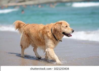 dog and beach