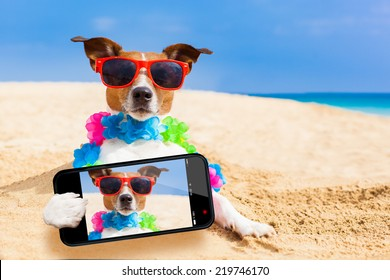 dog at the beach with a flower chain at the ocean shore wearing sunglasses taking a selfie