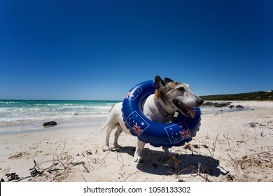 A dog at the beach on Australia Day.