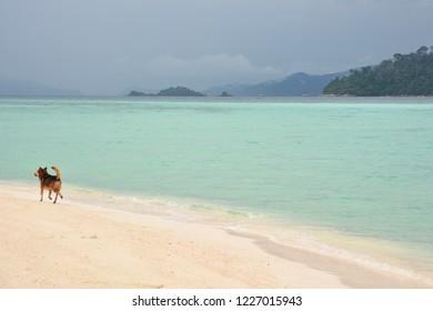 Dog at the beach on Koh Lipe, Thailand