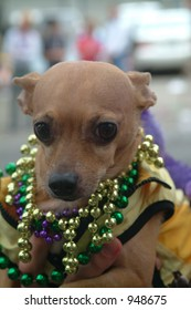 Dog with beads at Mardi Gras Parade, New Orleans