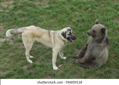 Dog and bear