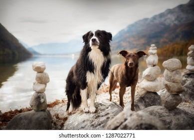 Dog in beautiful landscape between the mountains. Border Collie in beautiful landscape.