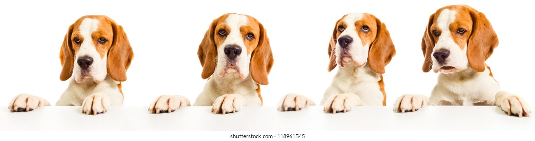 Dog before a white table, isolated on a white background