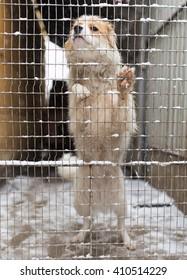 dog behind a metal fence