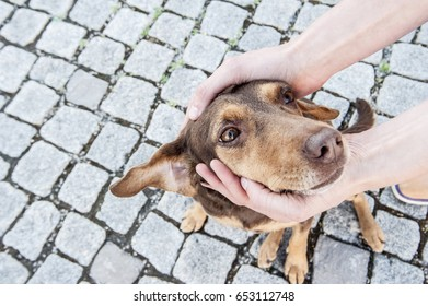 Dog being cuddled, protected petted on the head