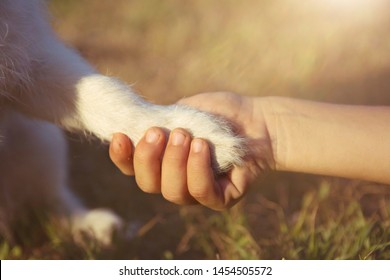 Dog best friend. Little puppy giving paw or high five to its child owner.