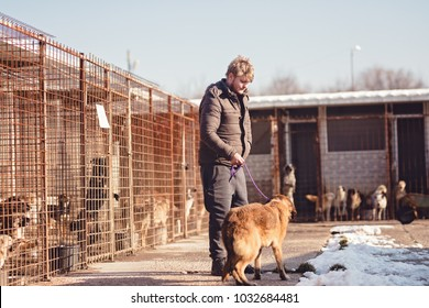 The dog is the best friend of man, a person adopts a dog from the shelter, the man takes home the dog from the animal shelter, dogs are waiting to be adopted, the brown dog is loyal
