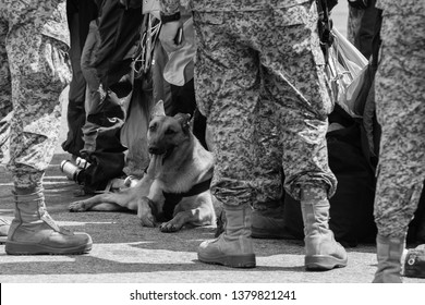 dog between the soldiers