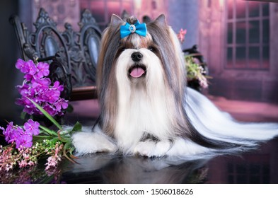 dog Biewer Yorkshire Terrier and flowers bouquets