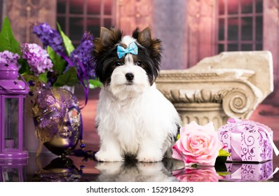 dog Biewer Yorkshire Terrier and flowers rose