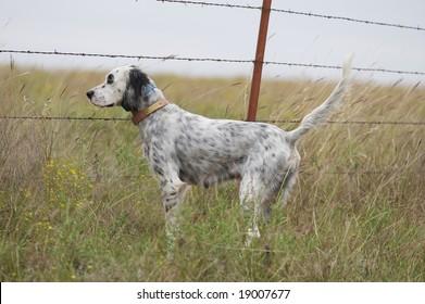 Dog Bird Hunting