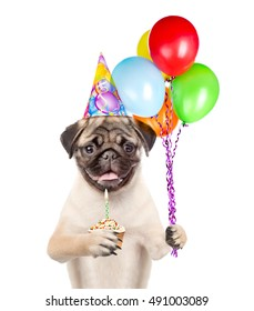 Dog in birthday hat holding balloons and cupcake. isolated on white background.