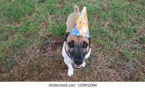 Dog with birthday hat in park