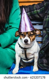 A dog with a birthday hat at the party