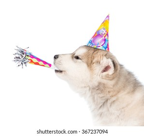 Dog in birthday hat whistle blowing. isolated on white background