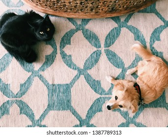 A dog and a black cat coexisting