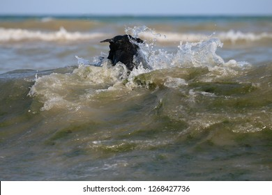 Dog at the Black sea with puller