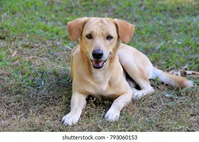 Dog black tongue