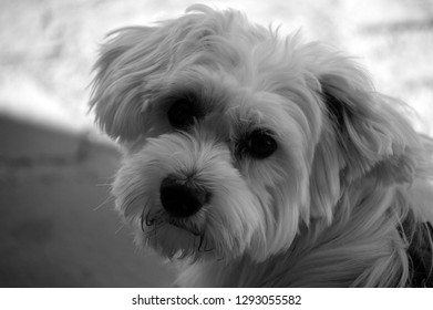 Dog in black and white
