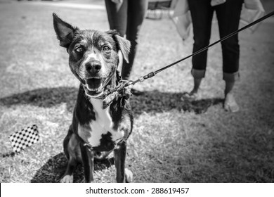 A dog in black and white at a park with its owners