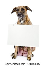 dog with a blank banner hung on the neck. isolated on white background