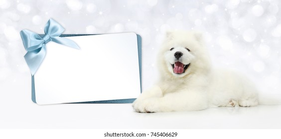 Dog with blank gift card isolated on blurred lights white background