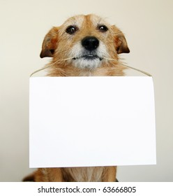 Dog with a blank sign
