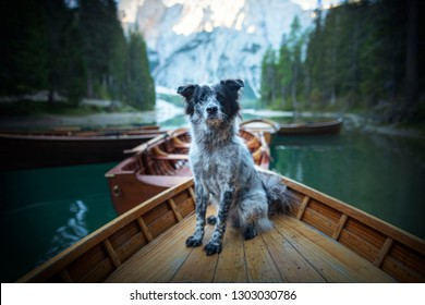 Dog in a boat. Adventures with dog.